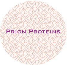 Prion Protein Research